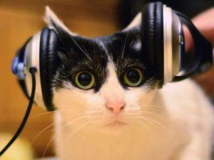 Какая музыка не подходит кошкам